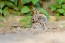 Kaninchen-Mai5