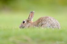 Kaninchen-Mai2