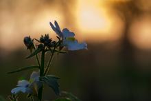 Blume im Gegenlicht