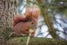 Eichhörnchen April - 1
