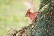 Eichhörnchen März - 1